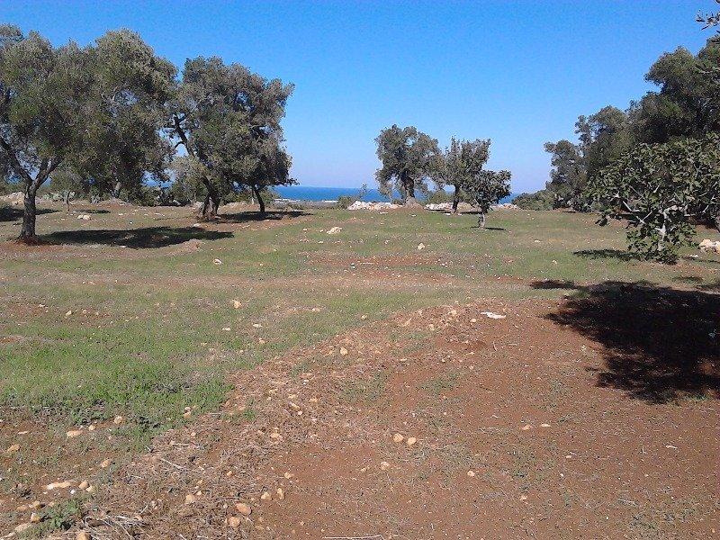 Ostuni terreni vista mare con progetto a Brindisi in Vendita
