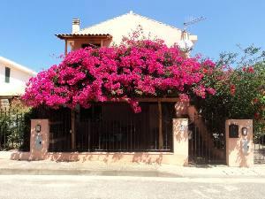 Annuncio vendita Calasetta villa