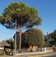 foto 5 - Gambellara casa singola a Ravenna in Vendita