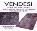 Annuncio vendita Montalto Uffugo terreno agricolo con vigneto