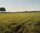 Annuncio vendita Vernole terreno seminativo