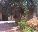 Annuncio vendita Casa campidanese a Pirri