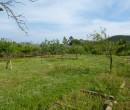 Annuncio vendita Asca terreno agricolo