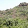 foto 3 - Lughio terreno agricolo a Nuoro in Vendita