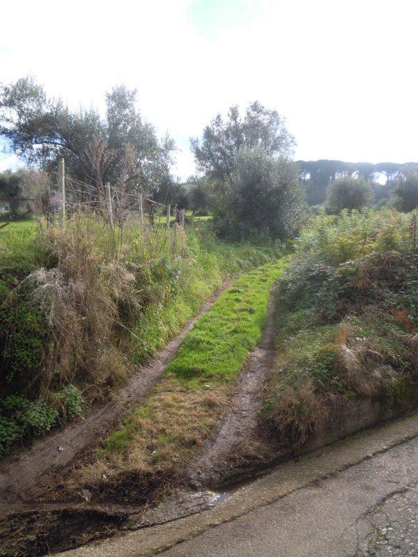 Palmi terreno agricolo pianeggiante a Reggio di Calabria in Vendita
