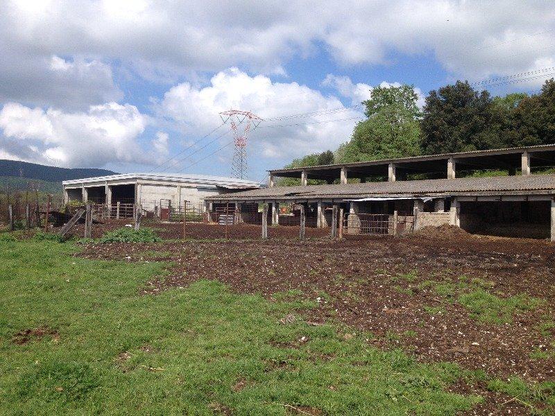 Amelia terreno agricolo con capannone a Terni in Vendita