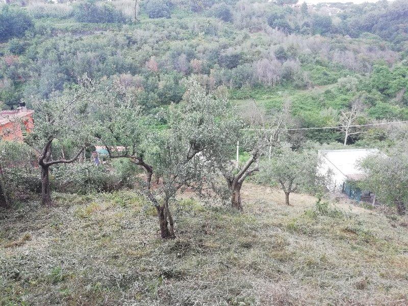 Grottaferrata lotto di terreno a Roma in Vendita