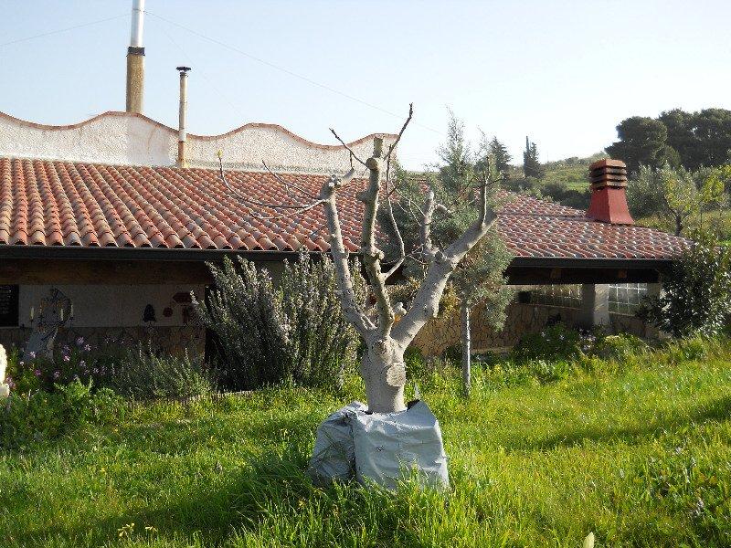Termini Imerese villa ammobiliata con terreno a Palermo in Vendita