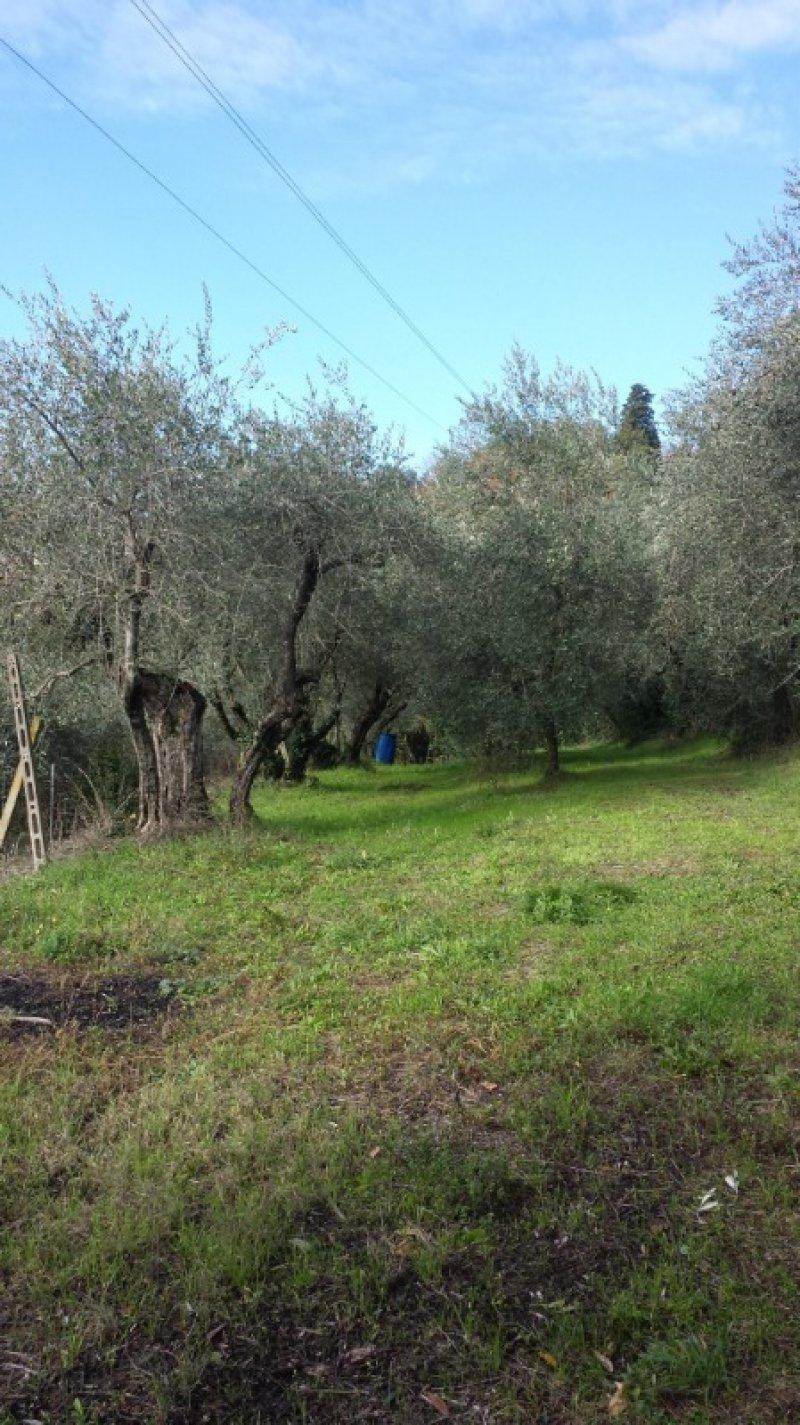 Firenze terreno agricolo zona collinare di Careggi a Firenze in Vendita