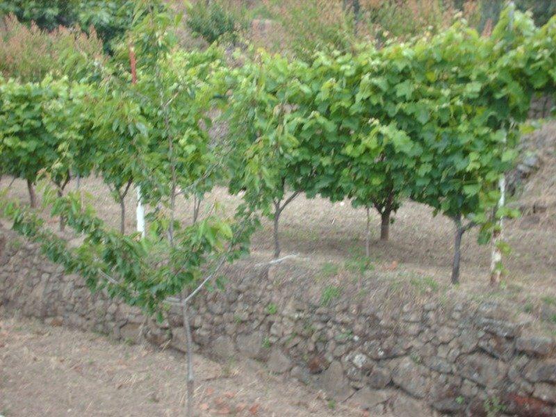 Calatabiano terreno agricolo a Catania in Vendita