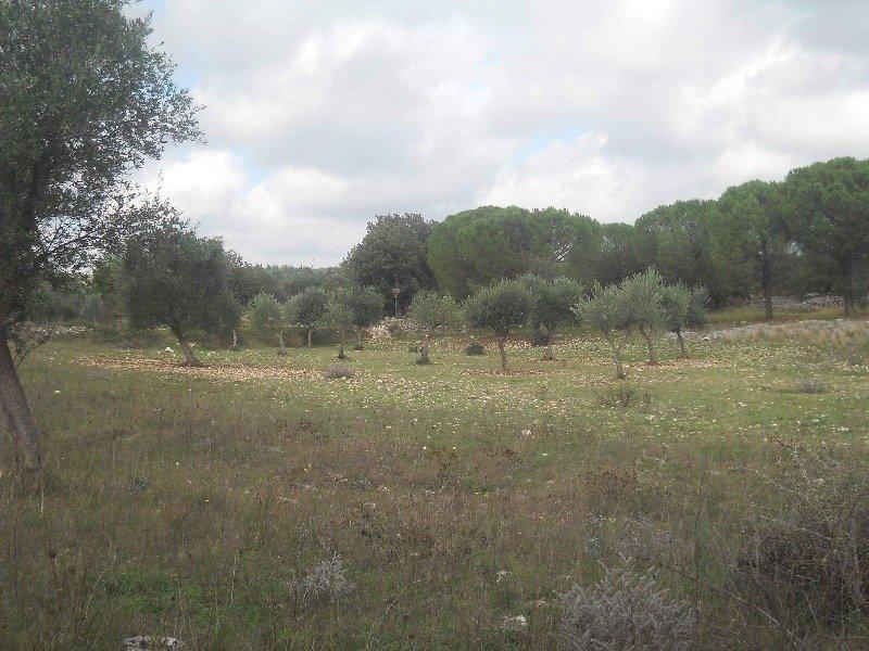 Grumo Appula terreno a Bari in Vendita