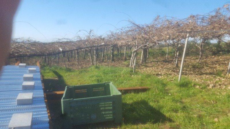 Albano Laziale terreno agricolo a Roma in Vendita
