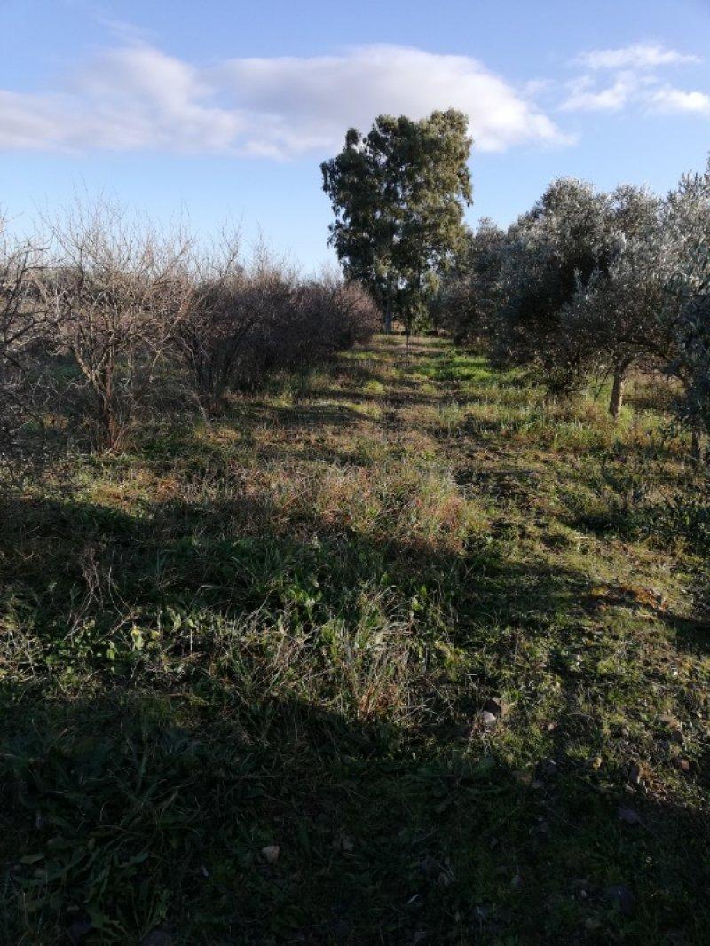 Terreno agricolo nell'agro di Uta a Cagliari in Vendita