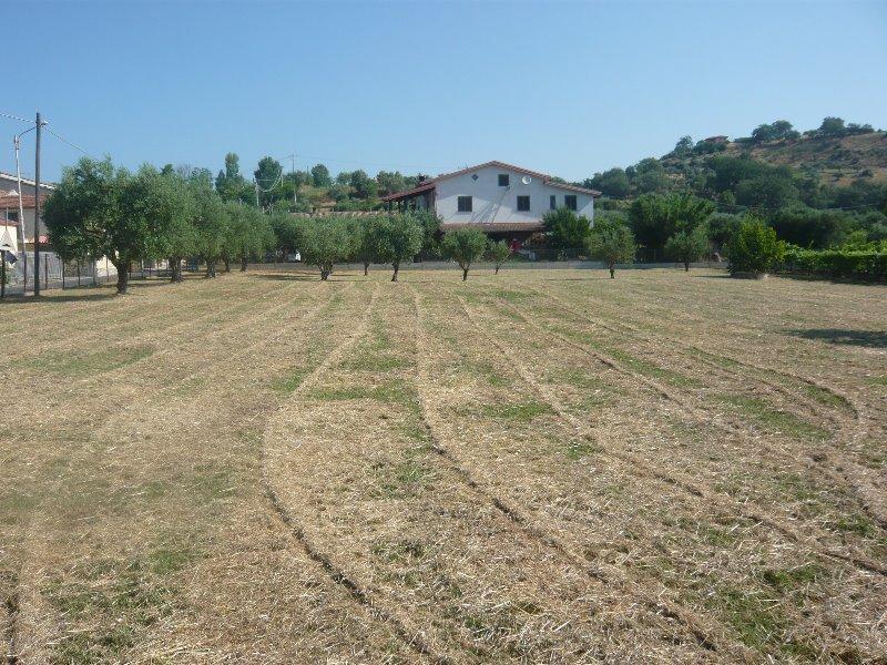 Mongrassano terreno edificabile con capannone a Cosenza in Vendita