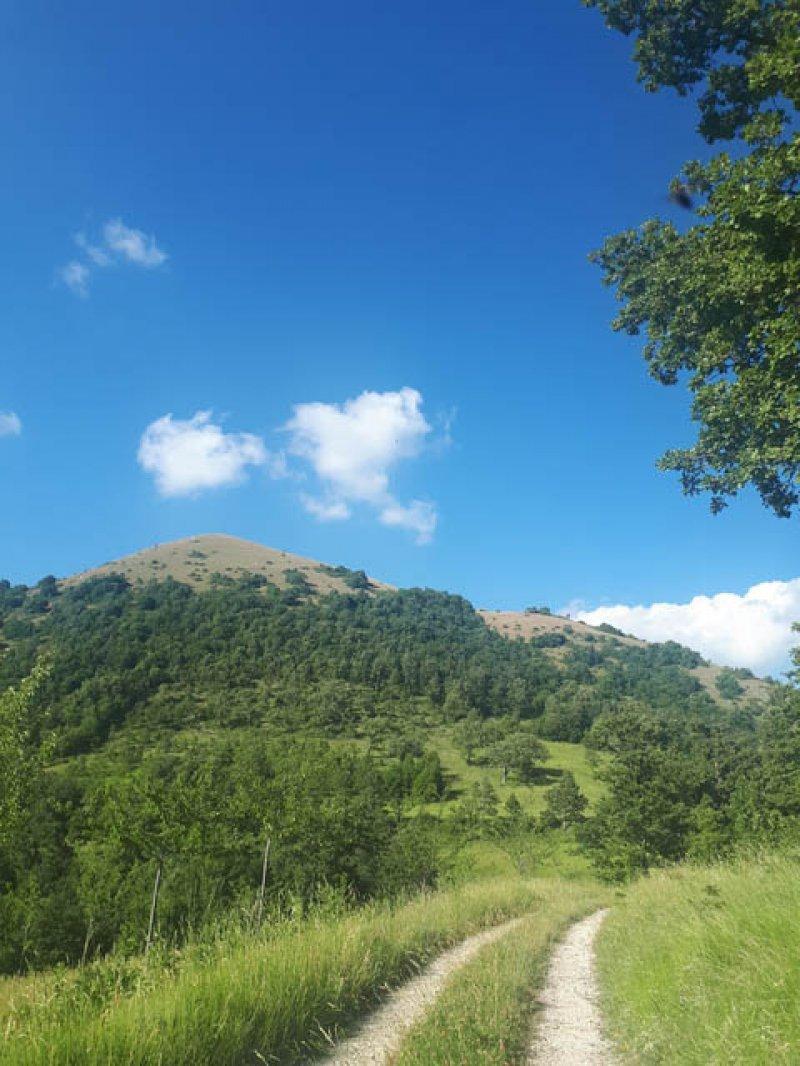 Vallo di Nera Monte Grande terreno a Perugia in Vendita