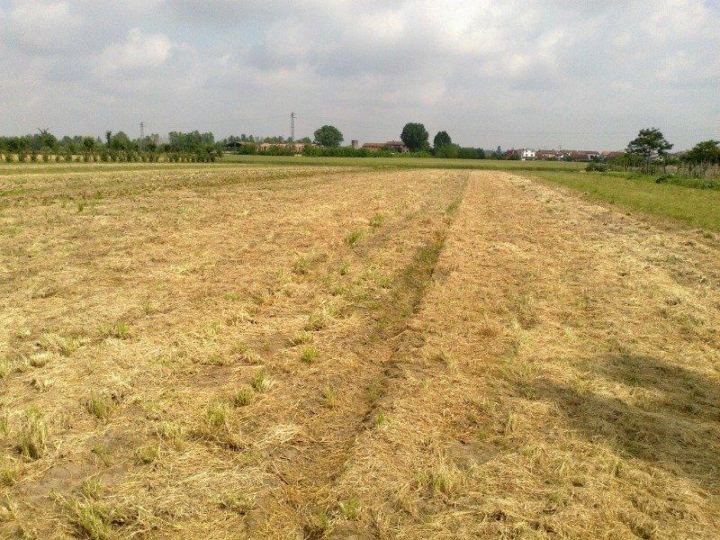 Terreno edificabile agricolo in Albania a Arezzo in Vendita