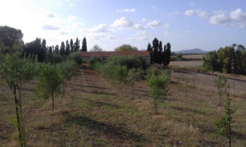 Olmedo terreno agricolo a Sassari in Vendita