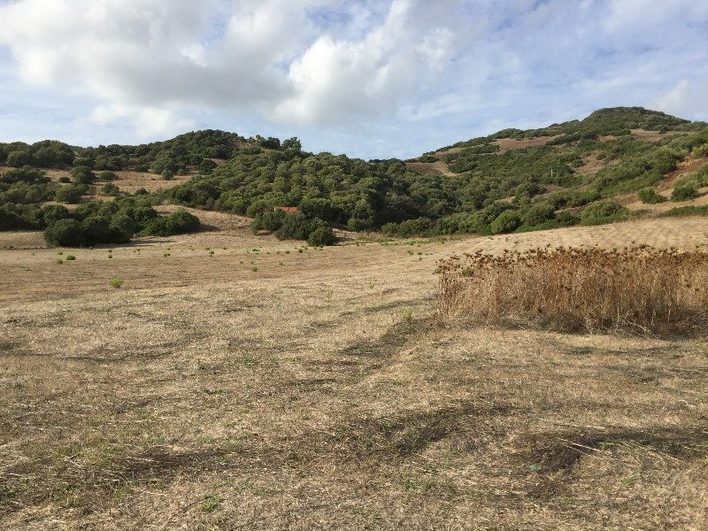 Osilo terreno agricolo a Sassari in Vendita