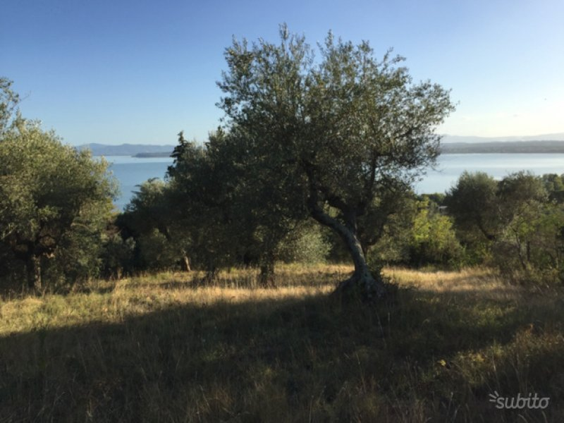 Terreno situato a Tuoro sul Trasimeno a Perugia in Vendita