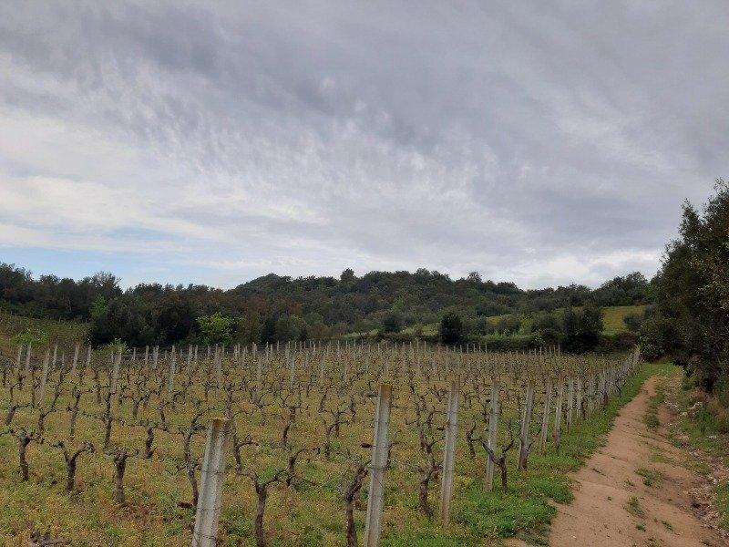Terreno in località Baunuxi a Ogliastra in Vendita