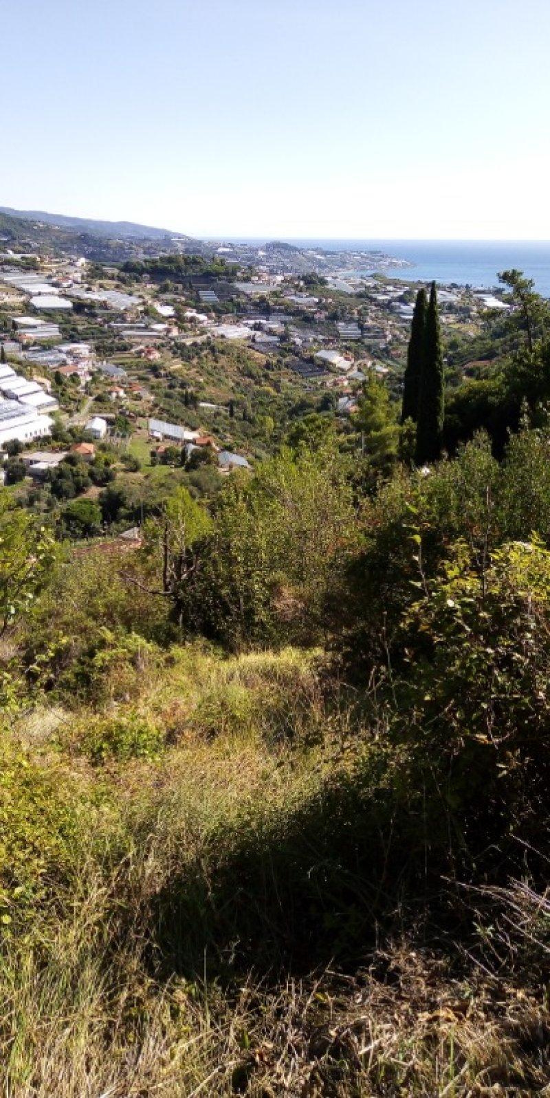 Sanremo terreno a terrazze a Imperia in Vendita