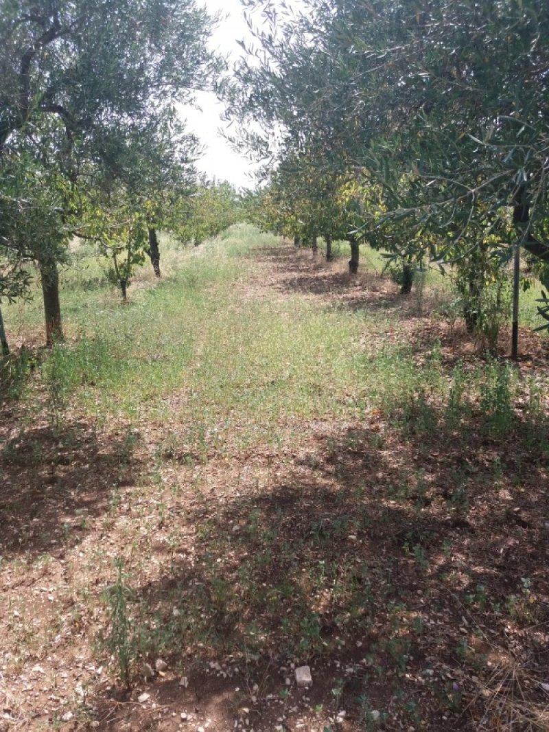 Ruvo di Puglia terreno agricolo con frutti a Bari in Vendita