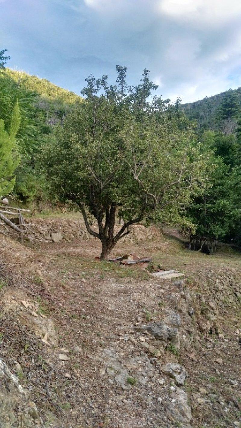 Vado Ligure terreno uliveto vicino al mare a Savona in Vendita