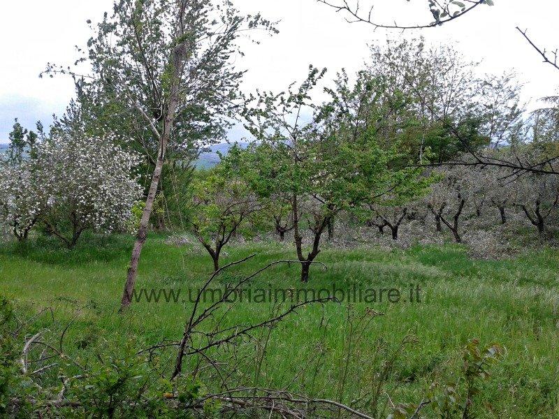 Zona Cappuccini di Todi terreno a Perugia in Vendita