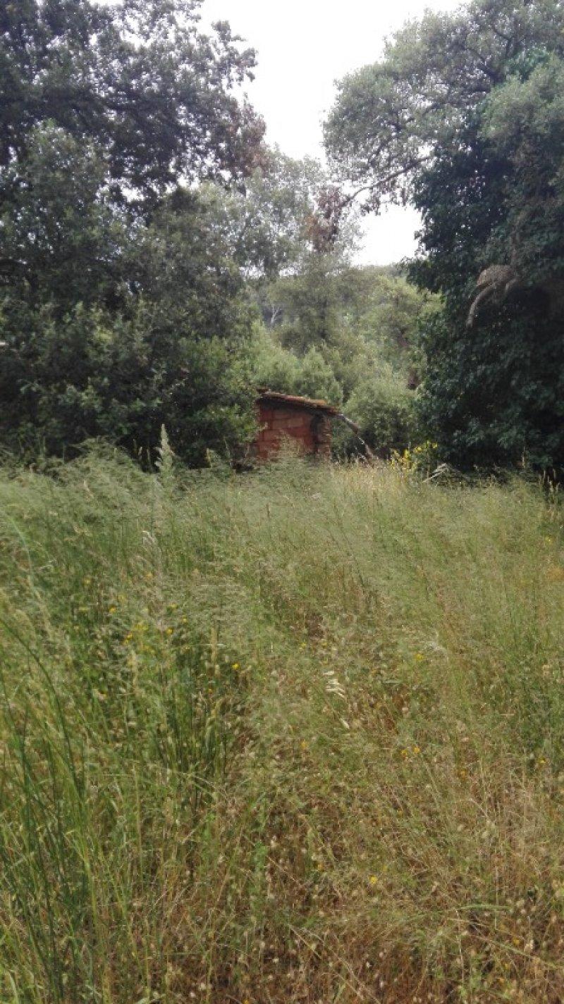 Campagnatico terreno agricolo a Grosseto in Vendita