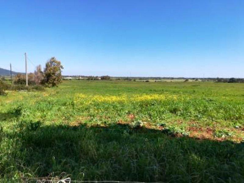 Nurra di Sassari azienda agricola a Sassari in Vendita