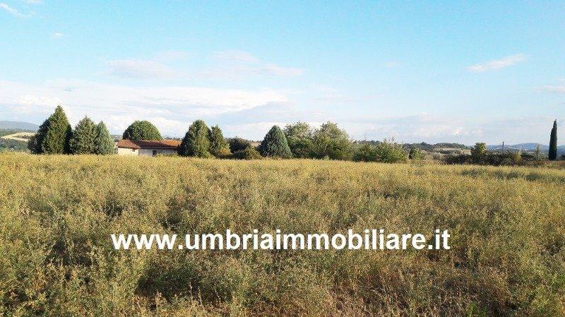 Todi terreno collinare ad uliveto a Perugia in Vendita