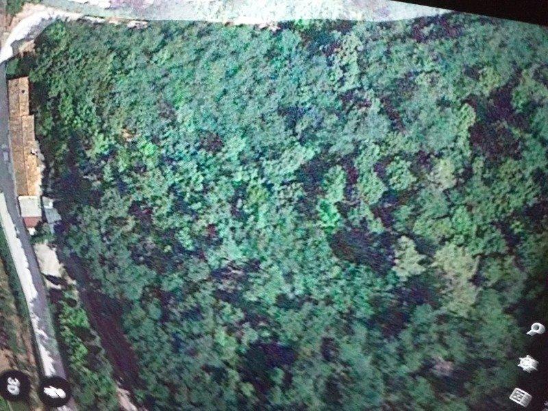 Pescia terreno boschivo a Pistoia in Vendita