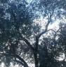foto 11 - Foggia terreno con annesso casale a Foggia in Vendita