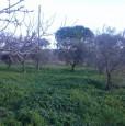 foto 7 - Foggia terreno con annesso casale a Foggia in Vendita