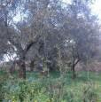 foto 6 - Foggia terreno con annesso casale a Foggia in Vendita