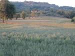 Annuncio vendita Terreno agricolo edificabile a Pantaniello