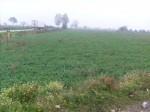 Annuncio vendita Terreno agricolo a San Tammaro