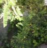 foto 3 - Quartu Sant'Elena appartamento a Cagliari in Affitto