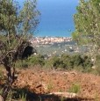 foto 1 - Terreno agricolo oliveto tra Lascari e Gratteri a Palermo in Vendita
