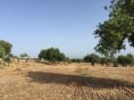Annuncio vendita Terreno edificabile a Modica