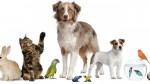 Annuncio vendita Attività di alimenti ed accessori per animali