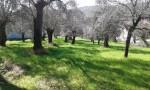 Annuncio vendita Giano Vetusto terreno agricolo