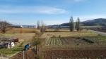 Annuncio vendita Montecalvo in Foglia lotti edificabili