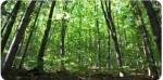 Annuncio vendita Piteccio appezzamenti di bosco ceduo e castagneto