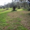 foto 2 - Palmi terreno agricolo pianeggiante a Reggio di Calabria in Vendita