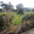 foto 0 - Palmi terreno agricolo pianeggiante a Reggio di Calabria in Vendita