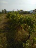 Annuncio vendita Monsummano Terme terreno con vigna