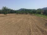 Annuncio vendita Barignano terreno agricolo
