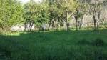 Annuncio vendita San Felice a Cancello terreno agricolo