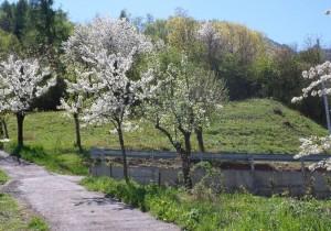 Annuncio vendita Pergine Valsugana lotto di terreno edificabile